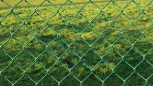 Maschendrahtzaun grün