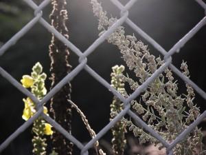 Maschendrahtzaun im Garten